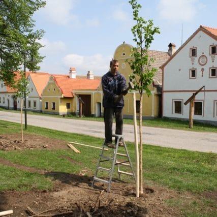 Parkové úpravy na návsi obce Holašovice (UNESCO)