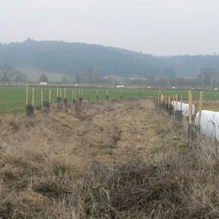 Výsadba zeleně pro obec Putim