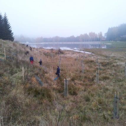 Výsadba Ktišský rybník