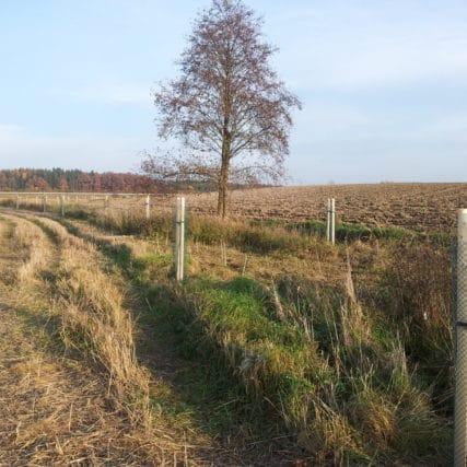 Výsadba krajinné zeleně v Košíně