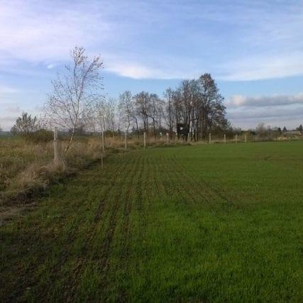 Krajinná zeleň Borkovice