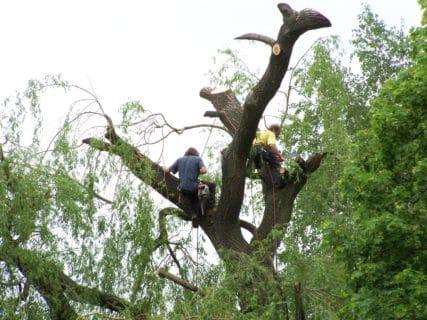 Péče o stromy