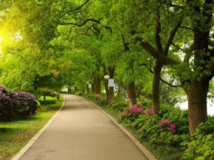 Parky a veřejná zeleň